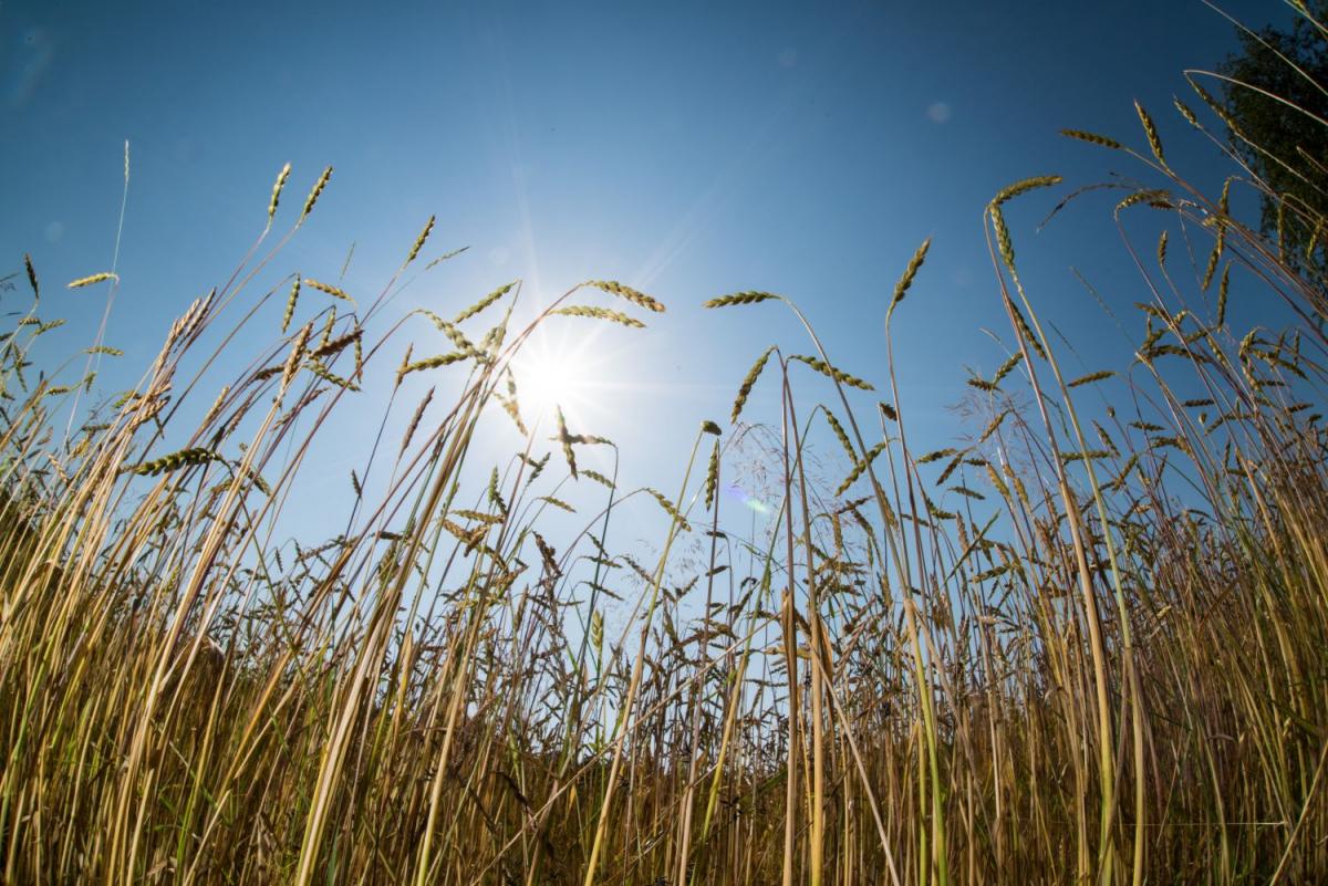 Ökolandbau bietet vielfältige Lösungsansätze für Umgang mit Dürre