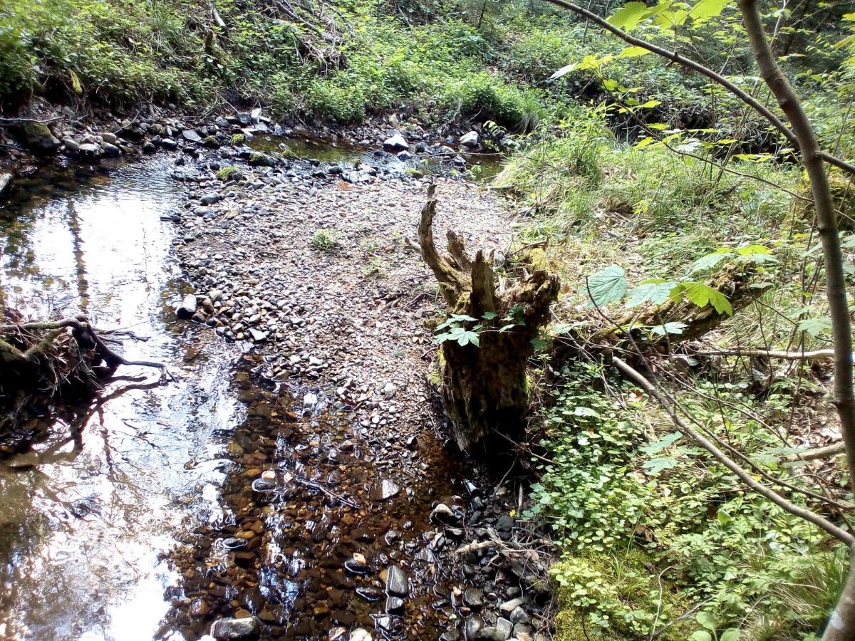 Ankündigung von Ortsbegehungen durch das Wasserwirtschaftsamt Traunstein