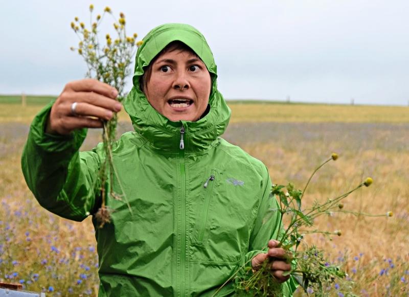 Beider FelderbegehungerklärteNaturschutzberaterinKatharinaSchertler, welche Ackerwildkräuter auf den Feldern zu finden sind, hier am Beispiel der echten Kamille (links) und der Acker-Hundskamille.Optisch kann man die beiden Arten kaumvoneinander unterscheiden.