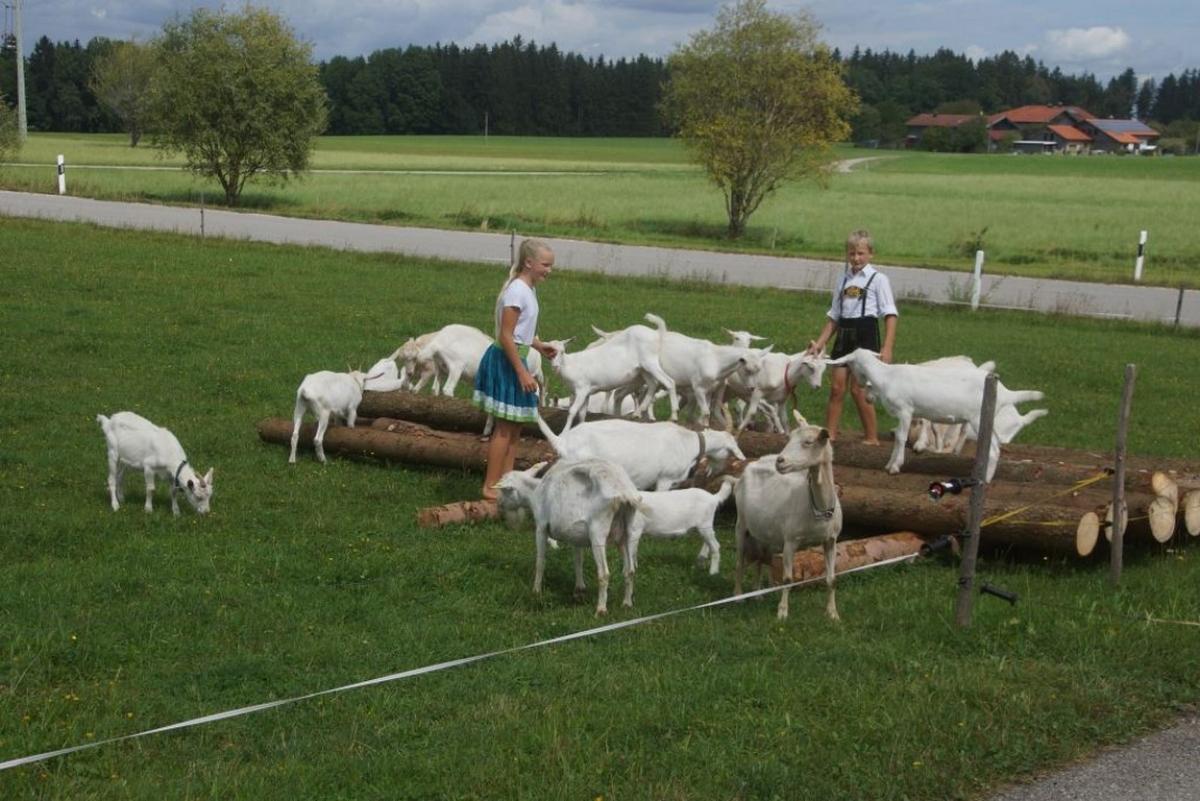 """Neben dem """"Rastplatzl zur Goaßnwiese"""" springen die Goaßn, die dem Ort den Namen gegeben haben, munter umher - mitten unter ihnen Vroni und Matthias Brandner."""