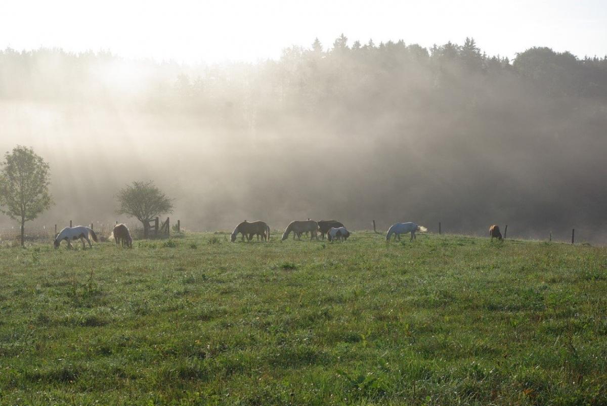 Pferde vom Huberhof