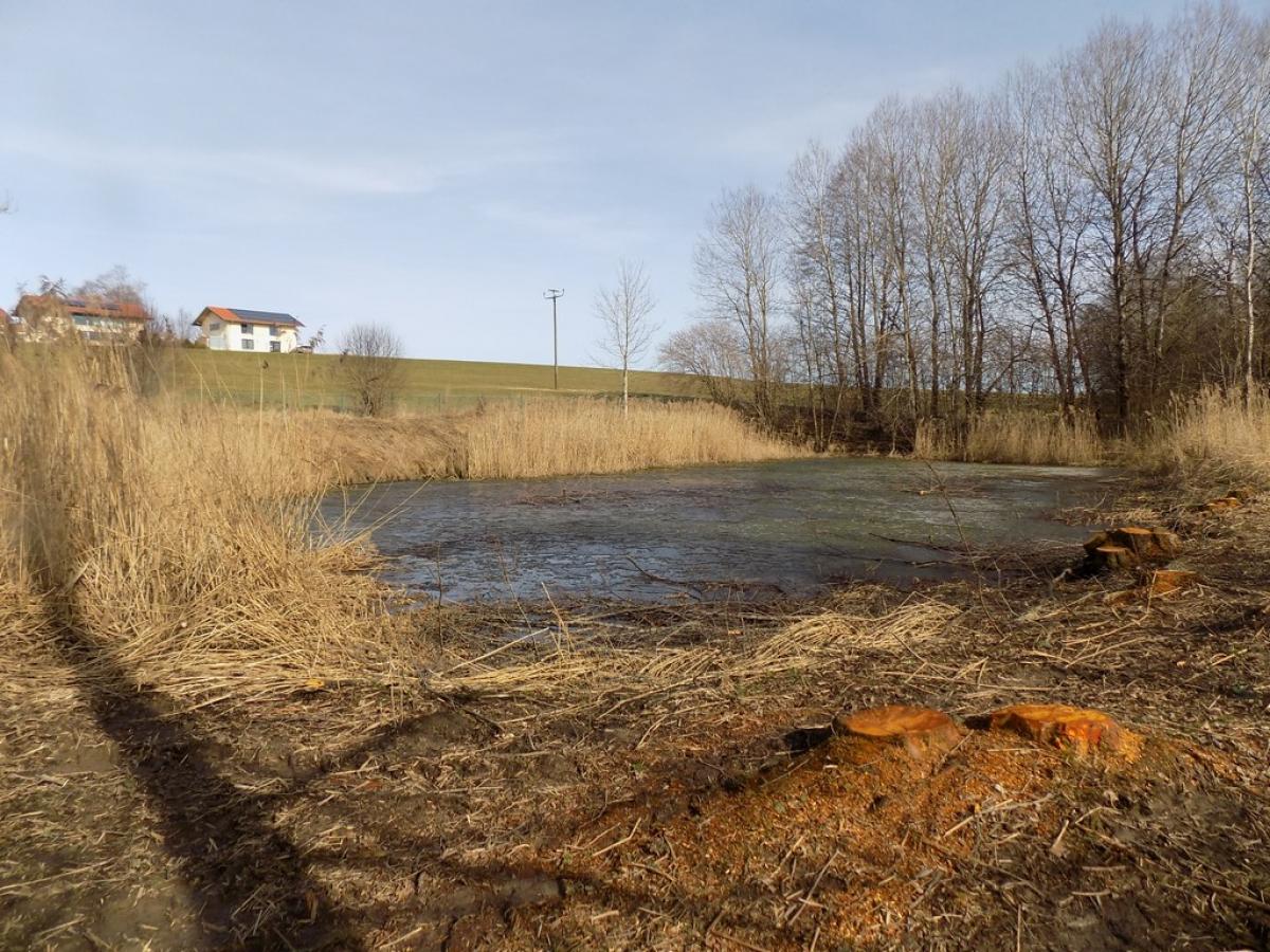 Der Weiher bei Hellmannsberg soll geräumt werden, damit er seine Funktion als Regenwasserrückhaltebecken behält.