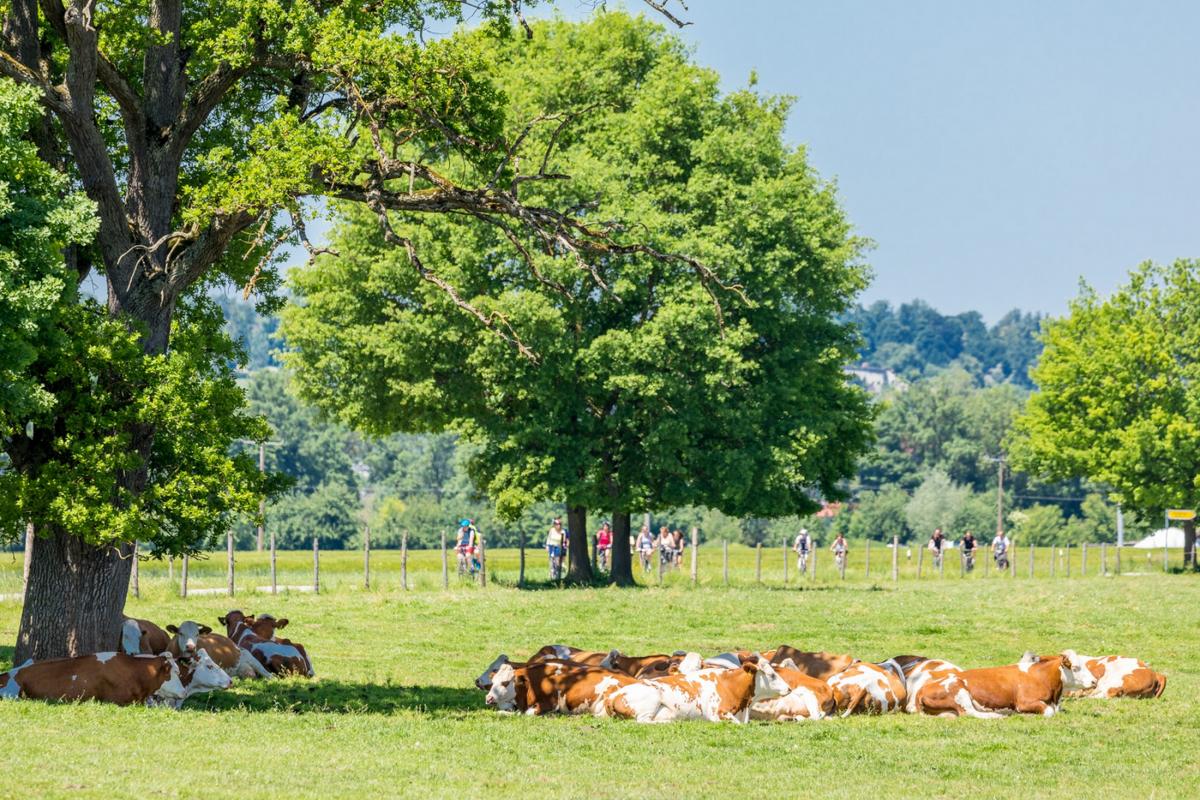 Umstellung auf Ökolandwirtschaft für Milchviehhalter jetzt deutlich attraktiver