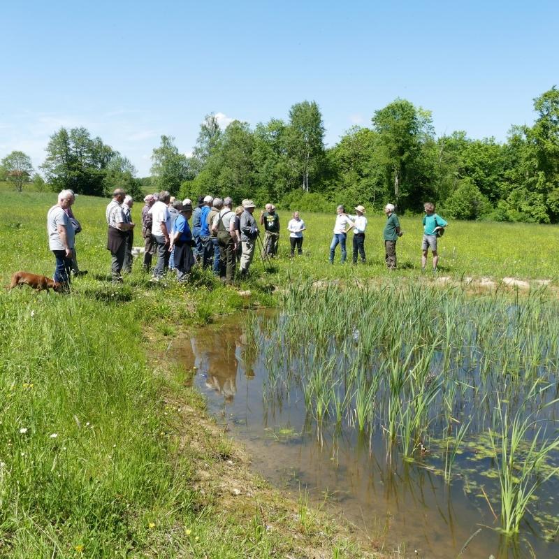 Muss der Mensch Ökosystemleistungen durch Technik ergänzen und ersetzen, dann kostet das viel Geld. Naturnah angelegte Wasserrückhaltebecken in Enzersdorf