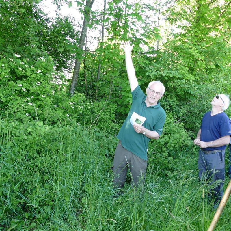 Förster Max Poschner erklärt die Schichtung des Waldsaums.