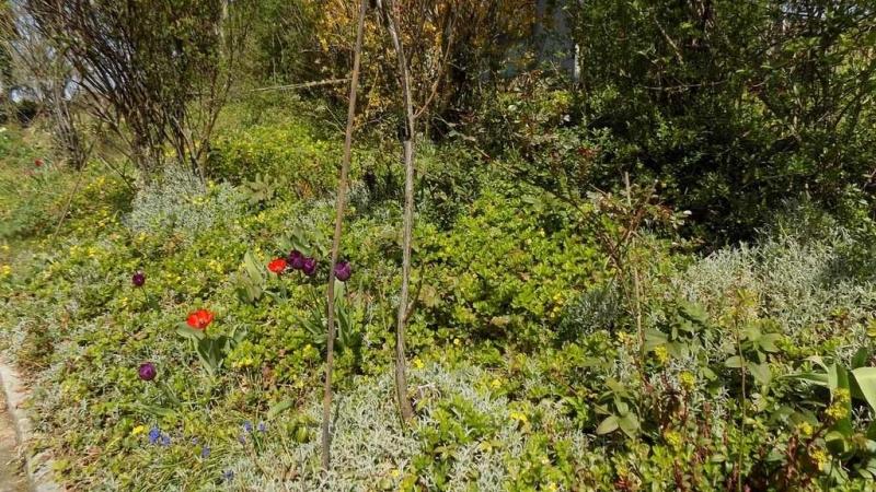 Zeit für einen naturnahen Garten: So erschaffen Sie ein Naturparadies!