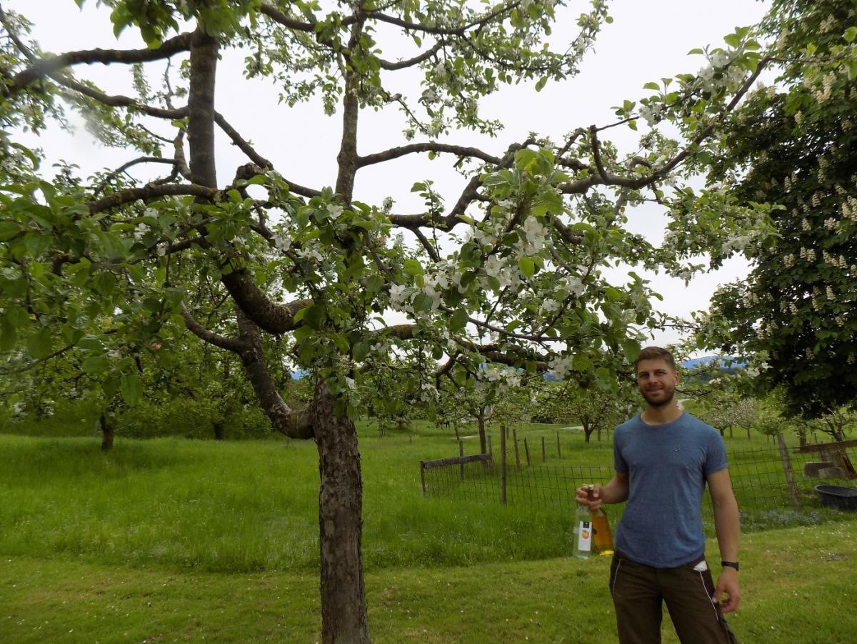 Franz Gramminger vor einem blühenden Apfelbaum auf seiner Streuobstwiese. Hier erntet er unter anderem die Äpfel und Birnen, die er für den beliebten Obstler braucht.