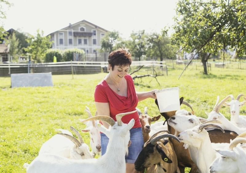 100 glückliche Ziegen leben auf Attls Bio-Ziegenhof.